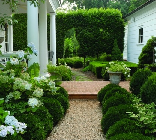 gravel walkway with boxwood and hyrdrangeas