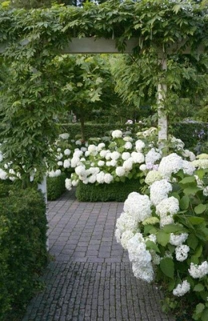 white hydrangeas with brick patio