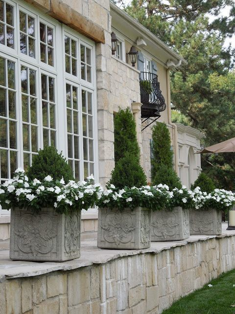 Evergreen pots with white impatiens