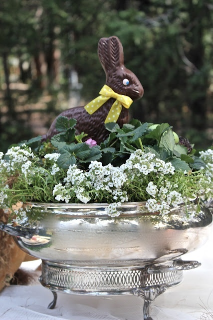 Love this Easter Centerpiece with Plants and Chocolate Bunny in Silver Pot