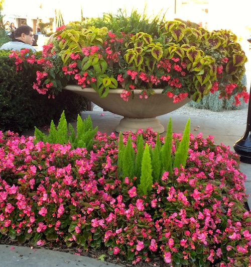 Container Gardening Inspirations Worthy Of Pinning