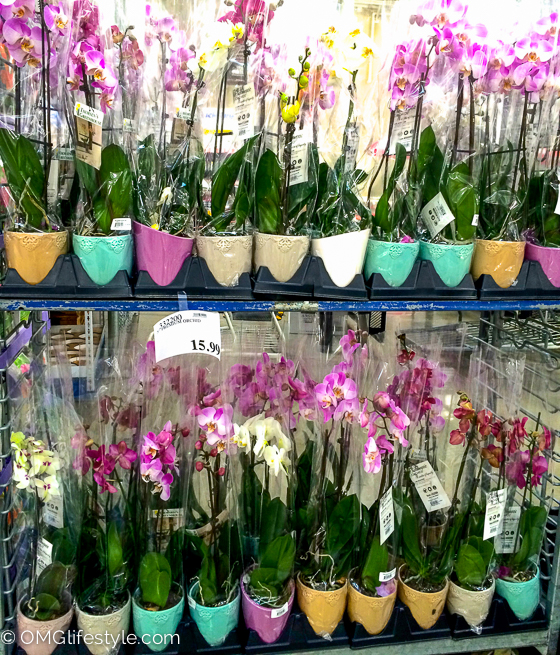 Costco Finds Spring Orchids-2