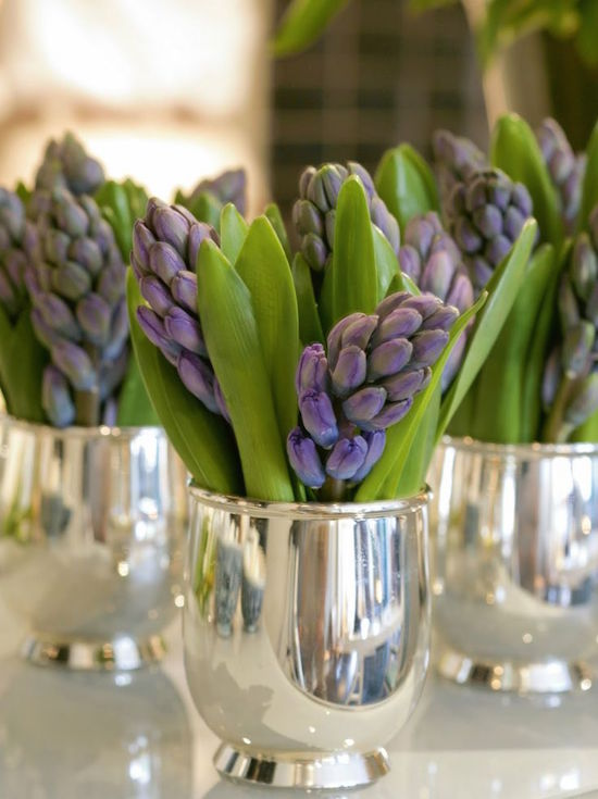 Hyacinths in silver julep cups