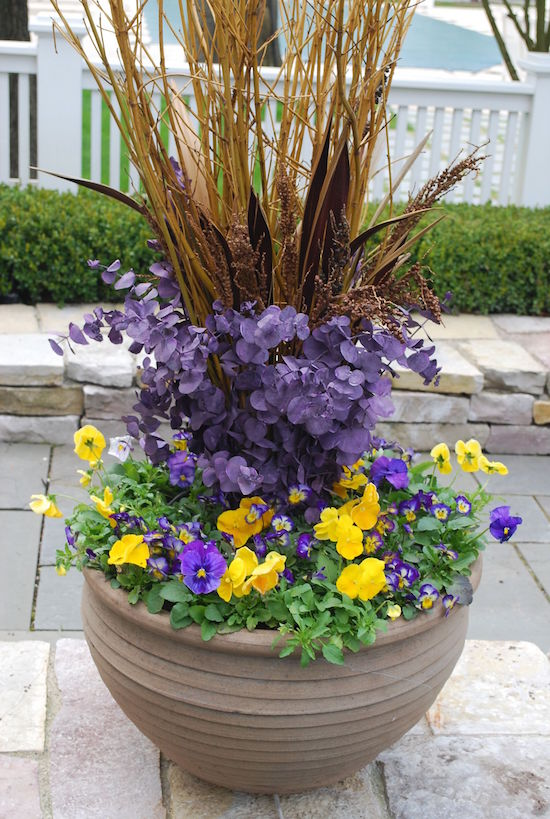 Pansies and Eucalyptus Spring Pot