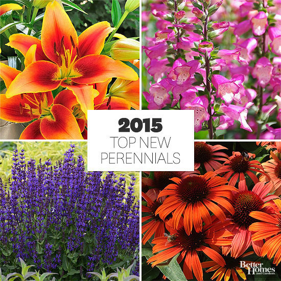 best perennials of 2015