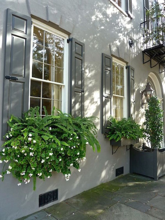 Charleston Window Boxes with Ferns | OMG Lifestyle Blog