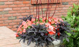 Container Gardening – Adding Color, Greenery and Height to Your Pots