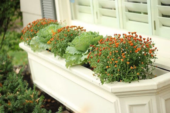 Mums and Kale in Fall Window Box | OMG Lifestyle Blog