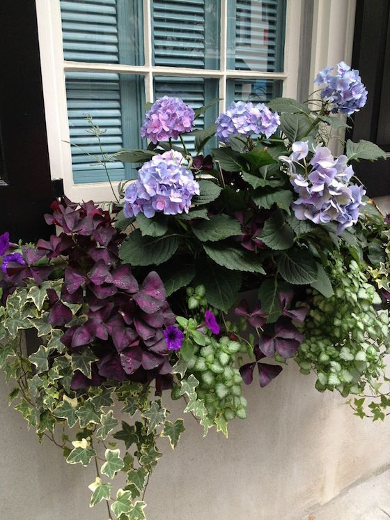 Purple Floral Window Boxes | OMG Lifestyle Blog