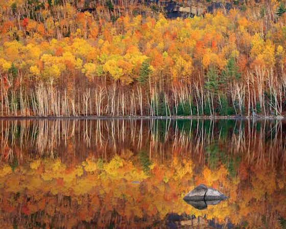 5 Tips for Better Fall Foliage Photos