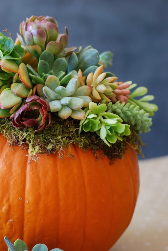 Pumpkin-Succulent-Arrangement