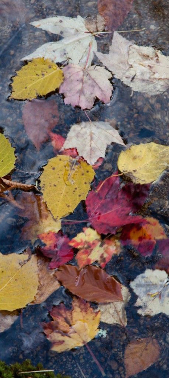 Tips from a Pro Photographer for Making Better Fall Foliage Photos