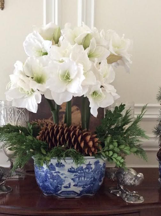 Beautiful White Amarylis for Christmas. Tuck some winter greens and pine cones into your pot for a decorative touch.