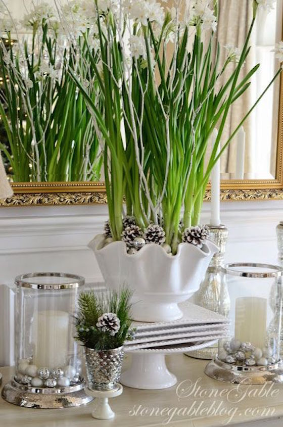 Forcing bulbs for Christmas Holidays adds a festive touch to your decorating. Add decorative pine cones to your potted paperwhites.