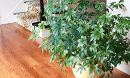 Houseplants | A Great Tip to Help Them Thrive