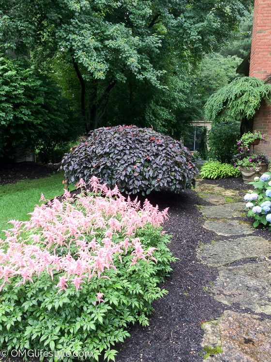 Side Yard Landscaping With Climbing Evergreens (4 Of 5)