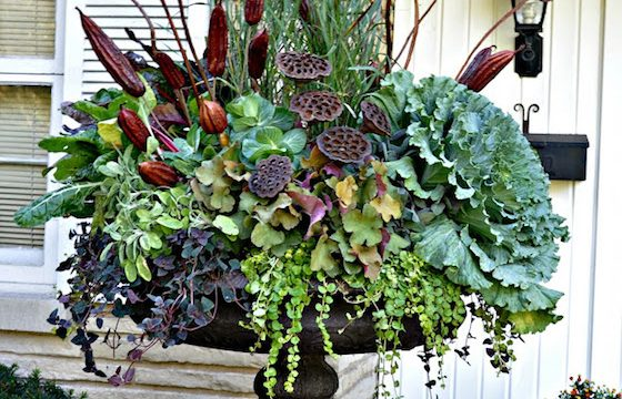 Gorgeous Fall Planters with Kale