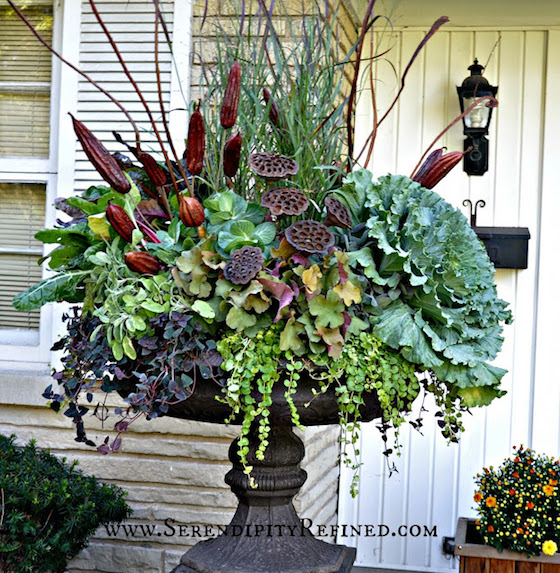 Planting Kale In Pots: Gorgeous Fall Planters With Kale