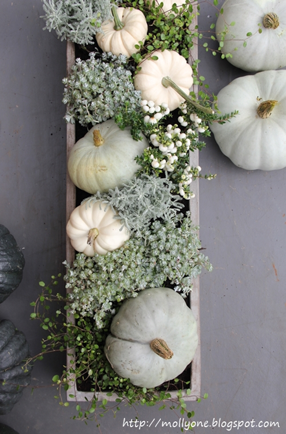 Miniature Pumpkin Centerpiece with live plants - perfect for a long table. Read the blog for 7 other Unique Thanksgiving Centerpieces