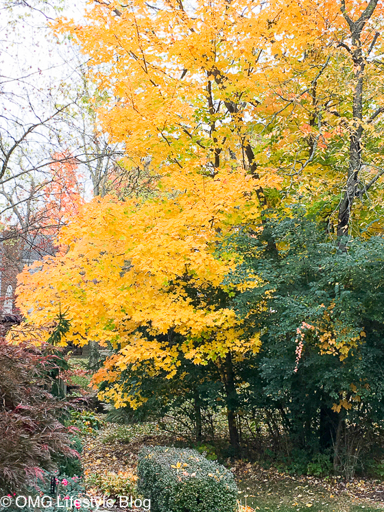 Fall foliage at its peak