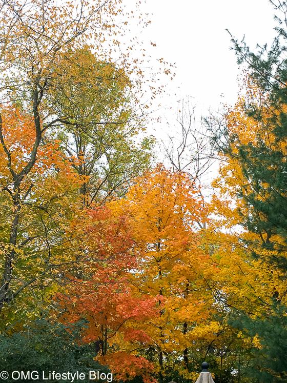 fall-foliage-2-of-2