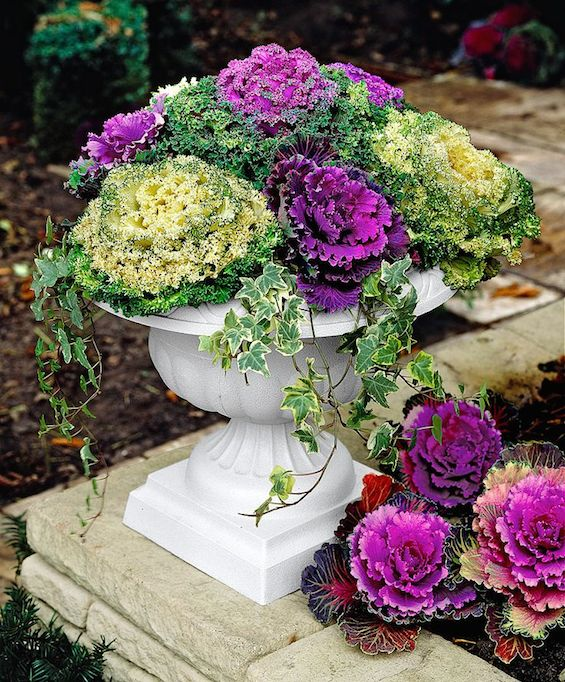 Planting Kale In Pots: Container Gardening For Fall