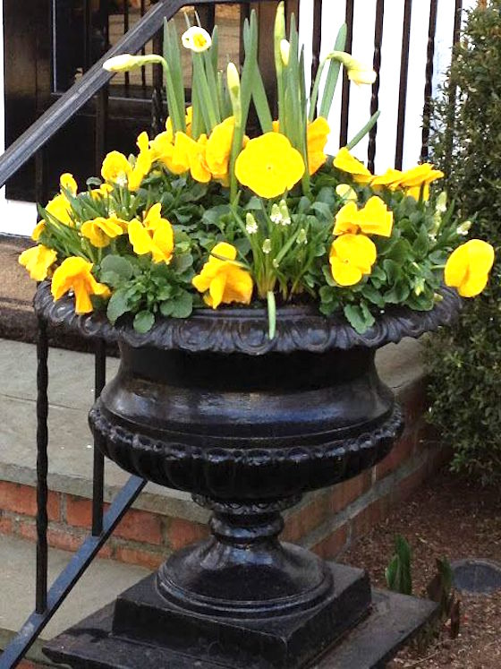 Elegant Spring Urn Yellow Pansies Daffodils Will Add A Pop Of Color To Your